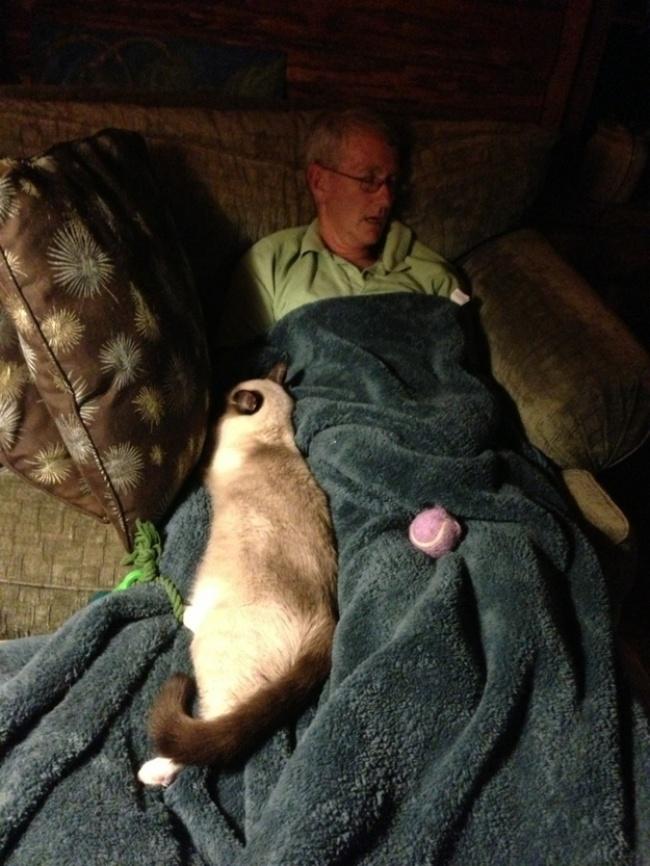Почему у кошек золотые сердца