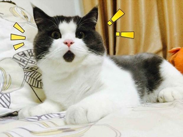 Самые известные коты интернета