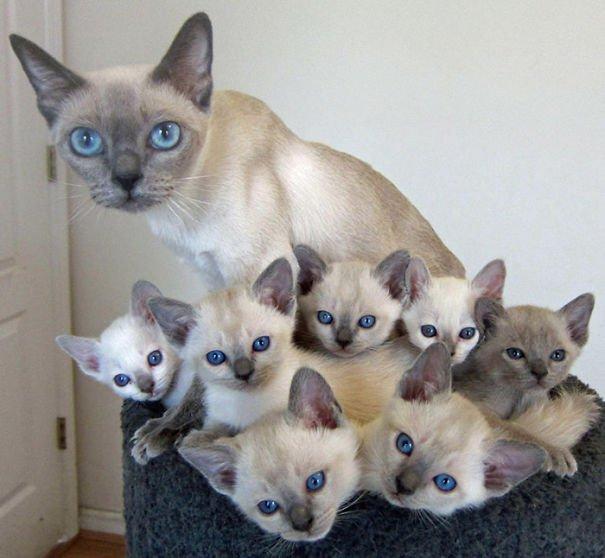 милых кошек и котят