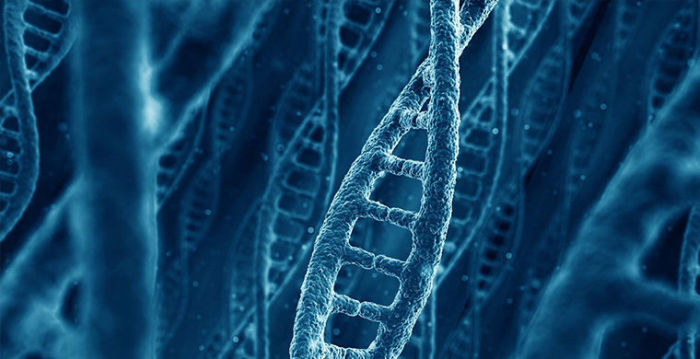 Загадки природы, которые удалось разгадать ученым