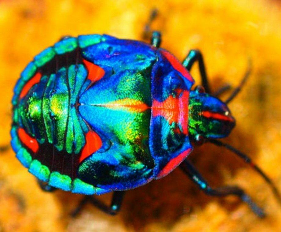10 разноцветных животных с радужной окраской