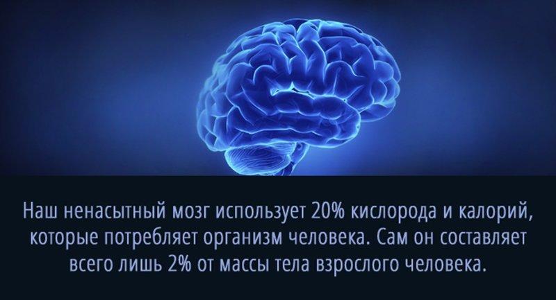 Интересные факты о нас самих