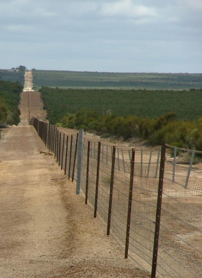 7 любопытных фактов об Австралии