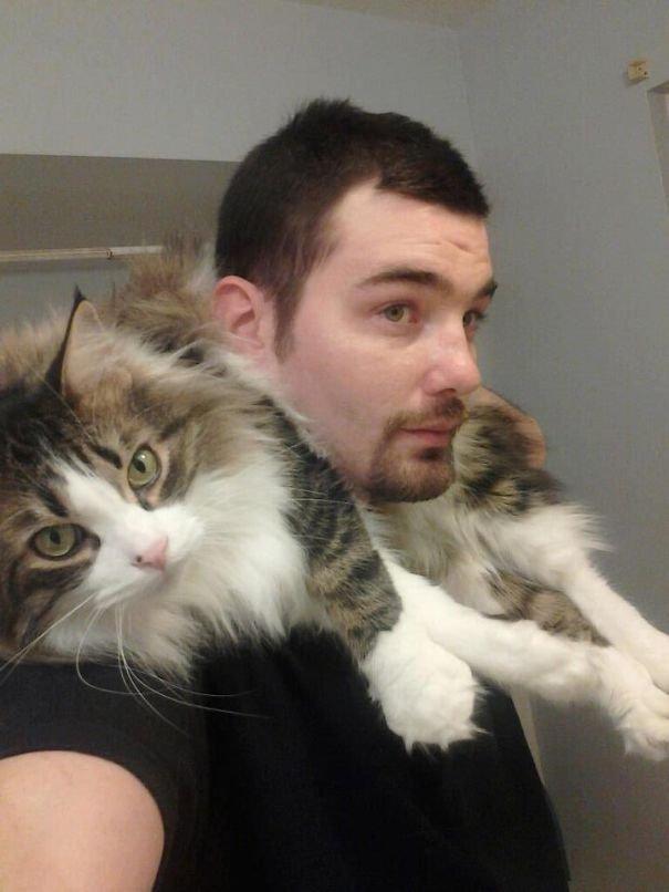 Мейн-куны - дружелюбные пушистые гиганты среди котов
