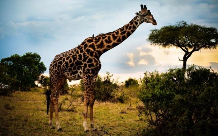 Datos interesantes sobre los animales.