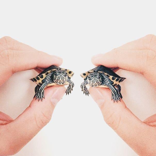 Очаровательные черепашки и черепашата