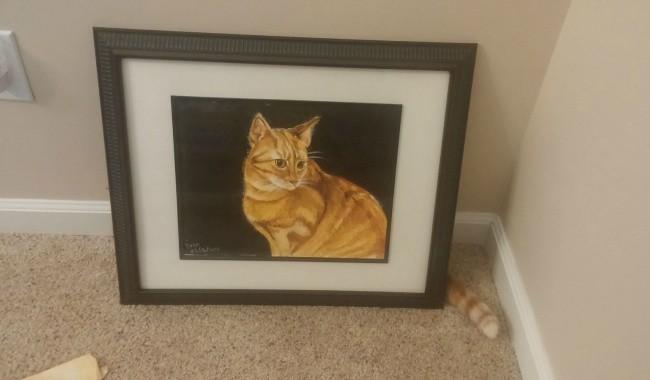 Фотографии котов, сделанные в подходящий момент