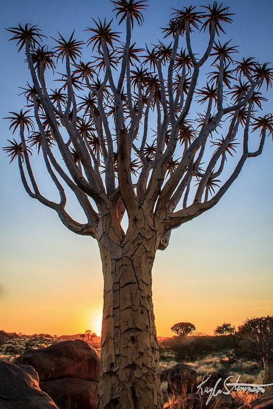 10 фантастических деревьев, в реальность которых трудно поверить