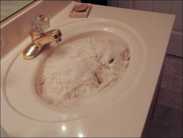 Коты знают толк в маскировке