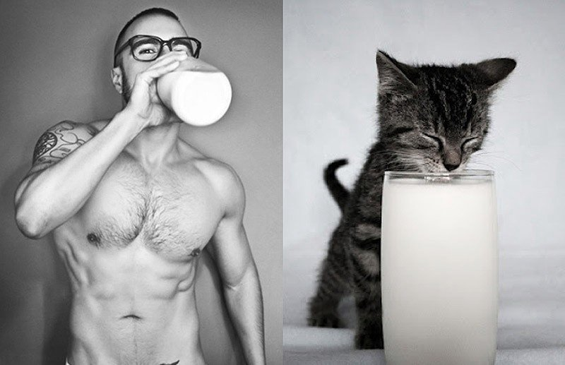 Женские слабости: котики против мужчин