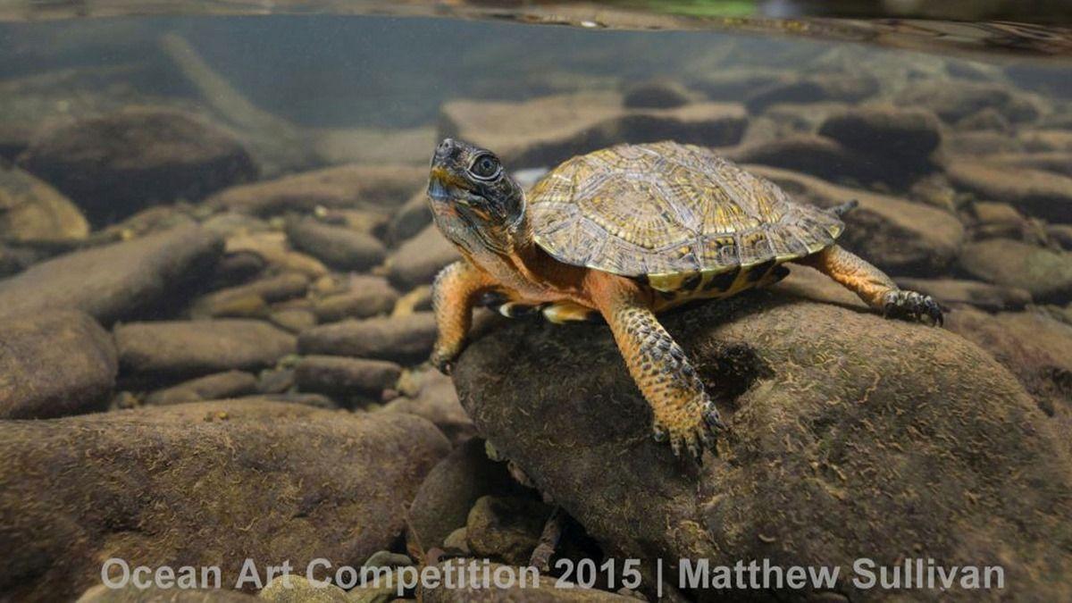 Лучшие подводные фотографии Ocean Art Underwater Photo Competition 2015