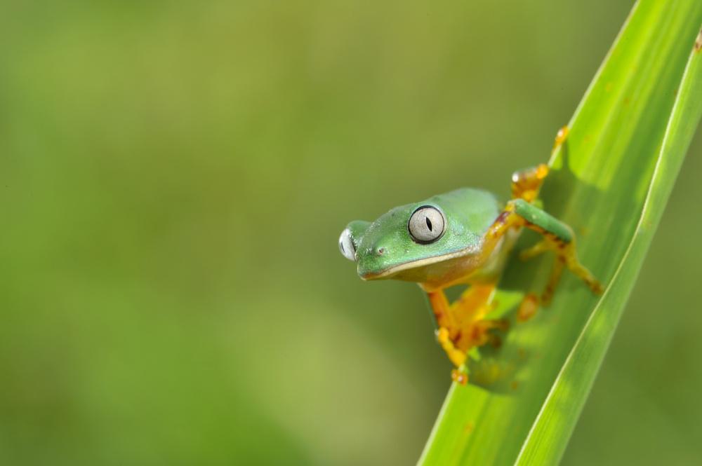 Когда природа смотрит на тебя