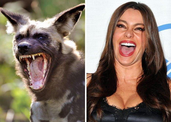Забавные животные, которые похожи на некоторых знаменитостей