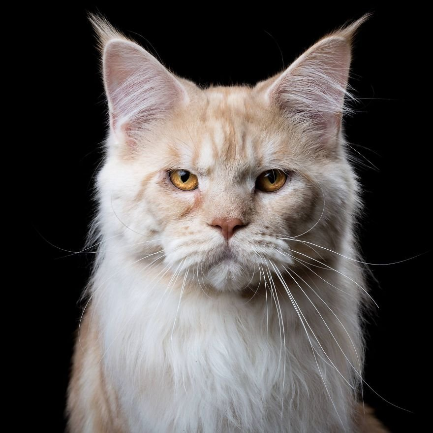 Портреты кошек и собак от Роберта Баху