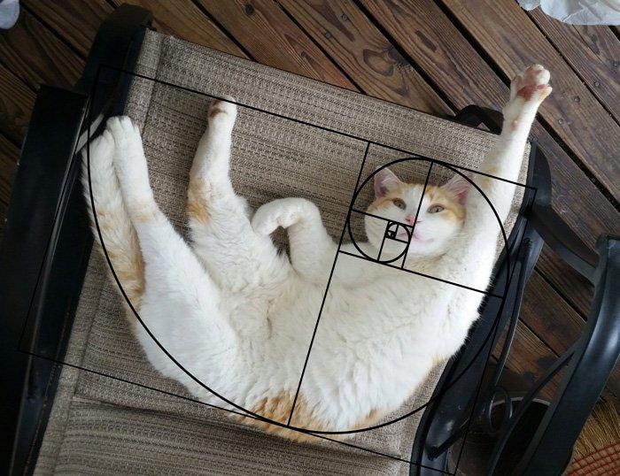 Идеальные кошки, которые знают про последовательность Фибоначчи