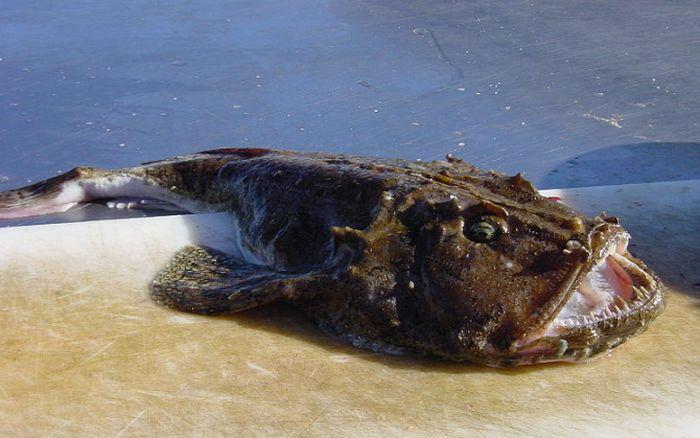 9 самых опасных рыб в мире