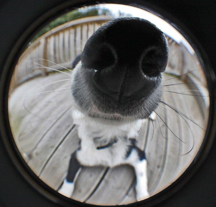 Любопытствующие носы, которым интересно, чем вы занимаетесь