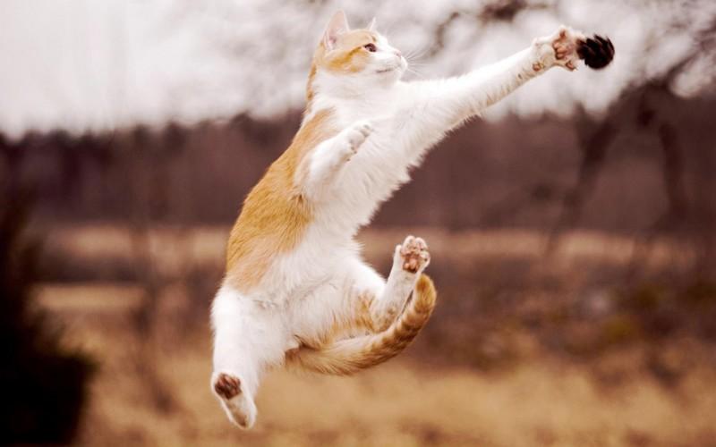 30 полезных способов использования котов в хозяйстве