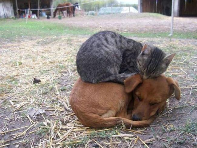Животные, которые тоже хотят тепла