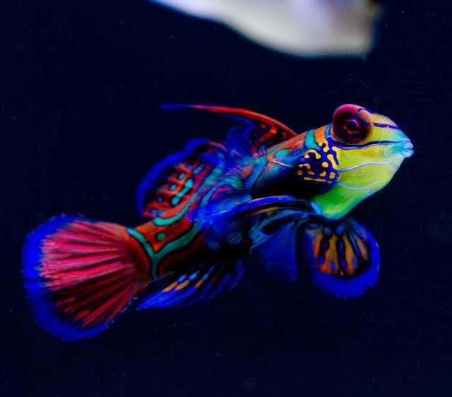 10 необычных морских обитателей