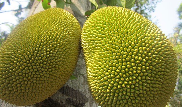 25 странных и необычных фруктов со всего мира