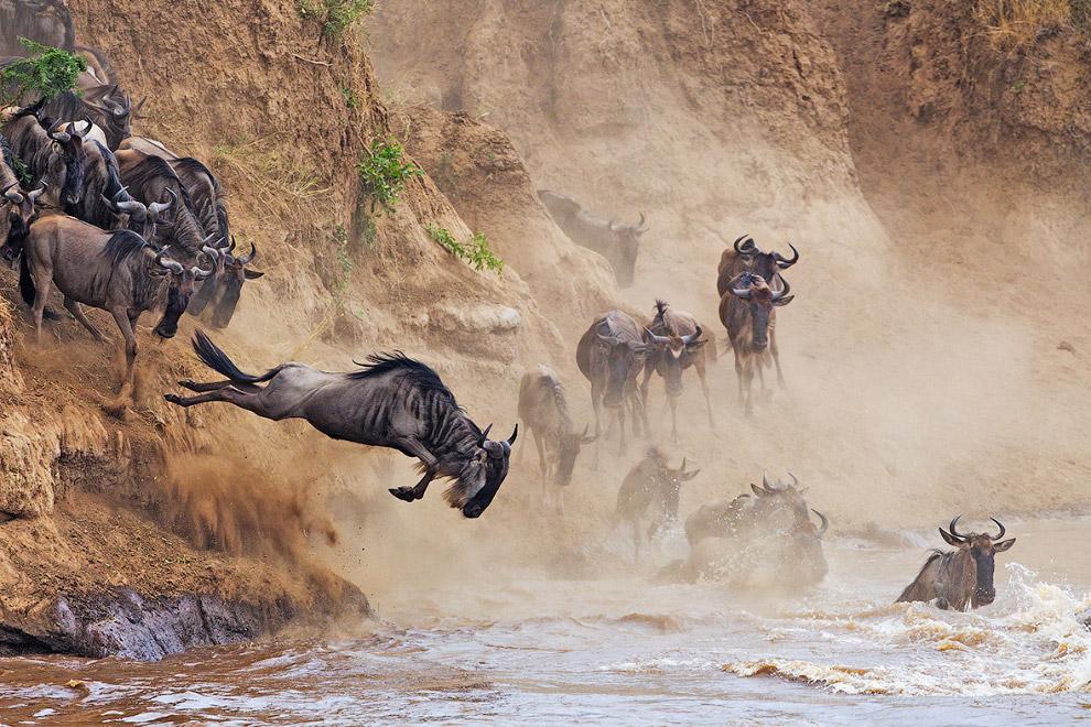 Красивые снимки с международного конкурса фотографии от журнала Smithsonian
