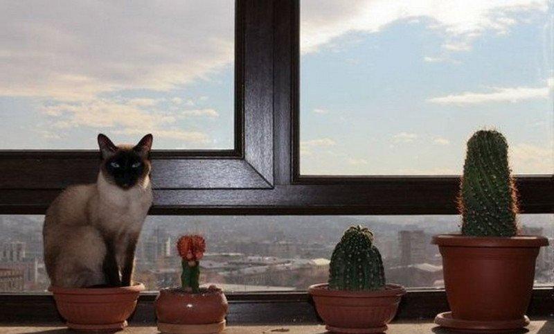 Коты, которые обожают цветы и цветочные горшки