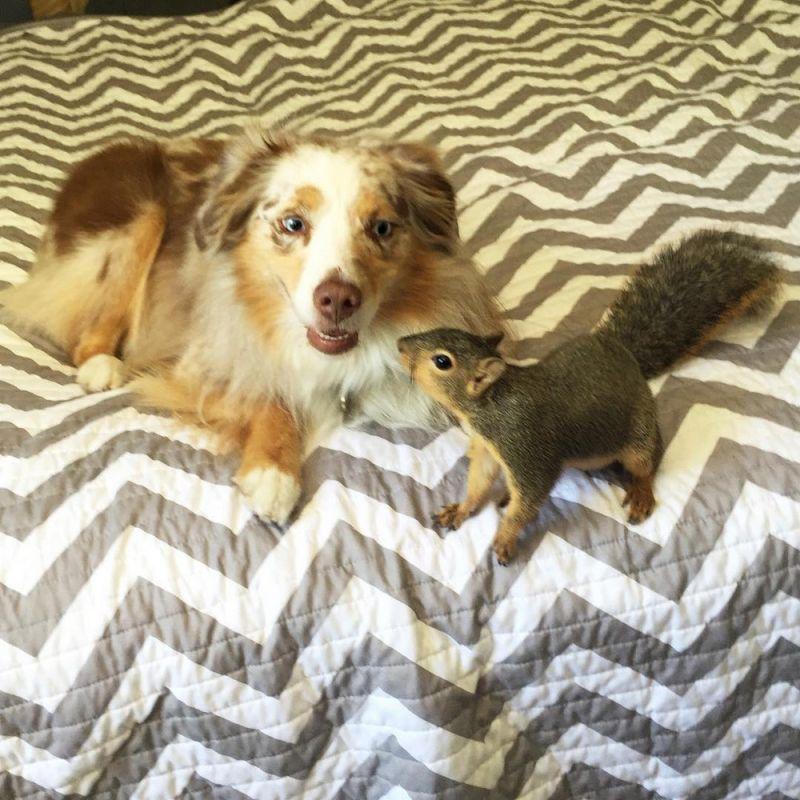 Удивительная дружба собаки и белки