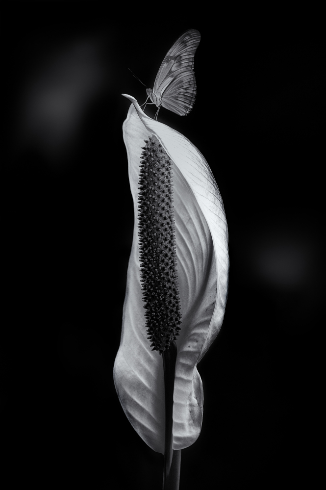 Чёрно-белые фотографии от Энрике Пелаэса