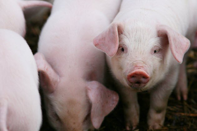 10 широко распространённых фактов про животных, которые являются абсолютно ошибочными