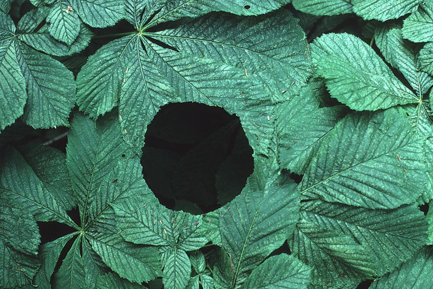 Лэнд-арт из природных материалов от Энди Голдсуорти