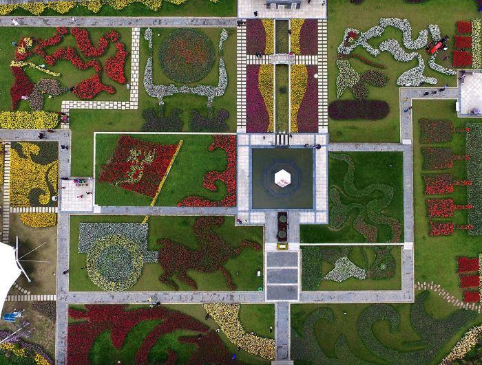 В Китае расцвели тюльпаны