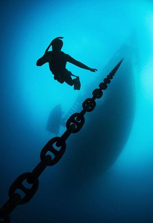 Лучшие работы конкурса подводных снимков