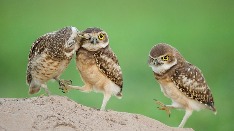 100 крутых фотографий сов, которые заряжают позитивом