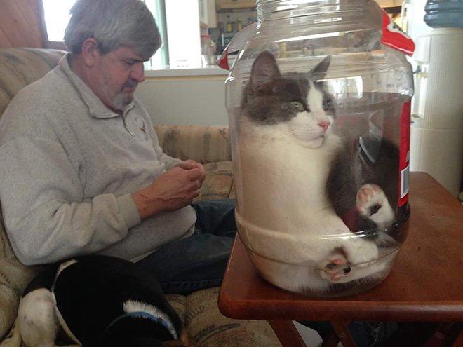 Домашние животные проявляют невозмутимость в самых необычных ситуациях