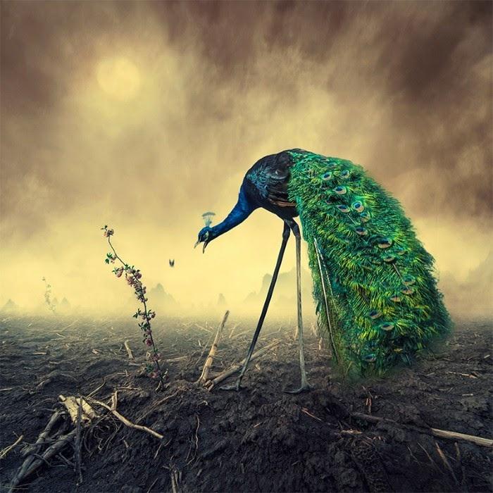 Потрясающие фотоиллюстрации от Караша Йонуц