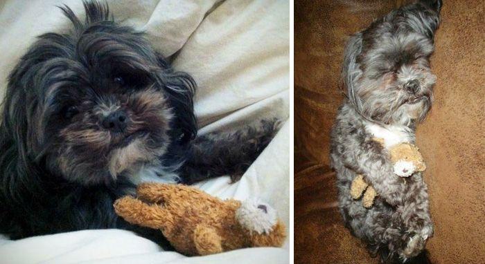 20 взрослых домашних животных, которые любят свои детские игрушки