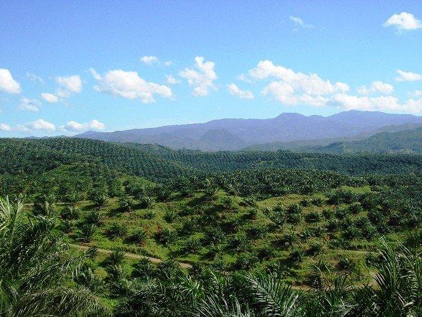 25 шокирующих и печальных фактов про пальмовое масло