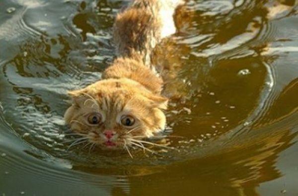 цены сон мутная вода в бассейне и тигренок арендой