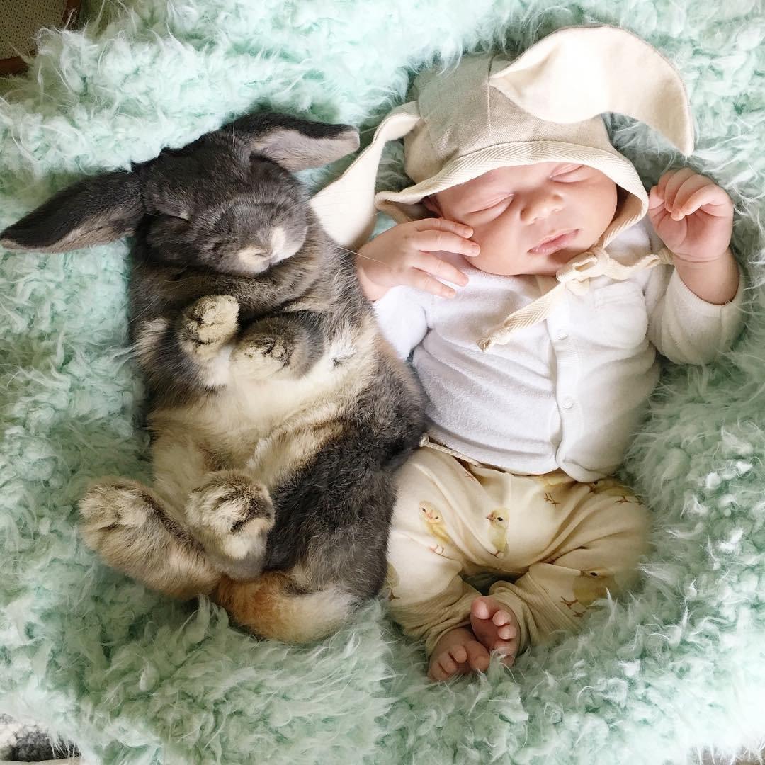 Секс с кроликами 5 фотография