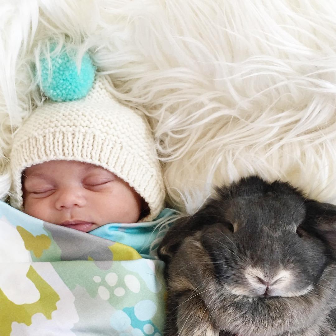 Секс с кроликами 11 фотография