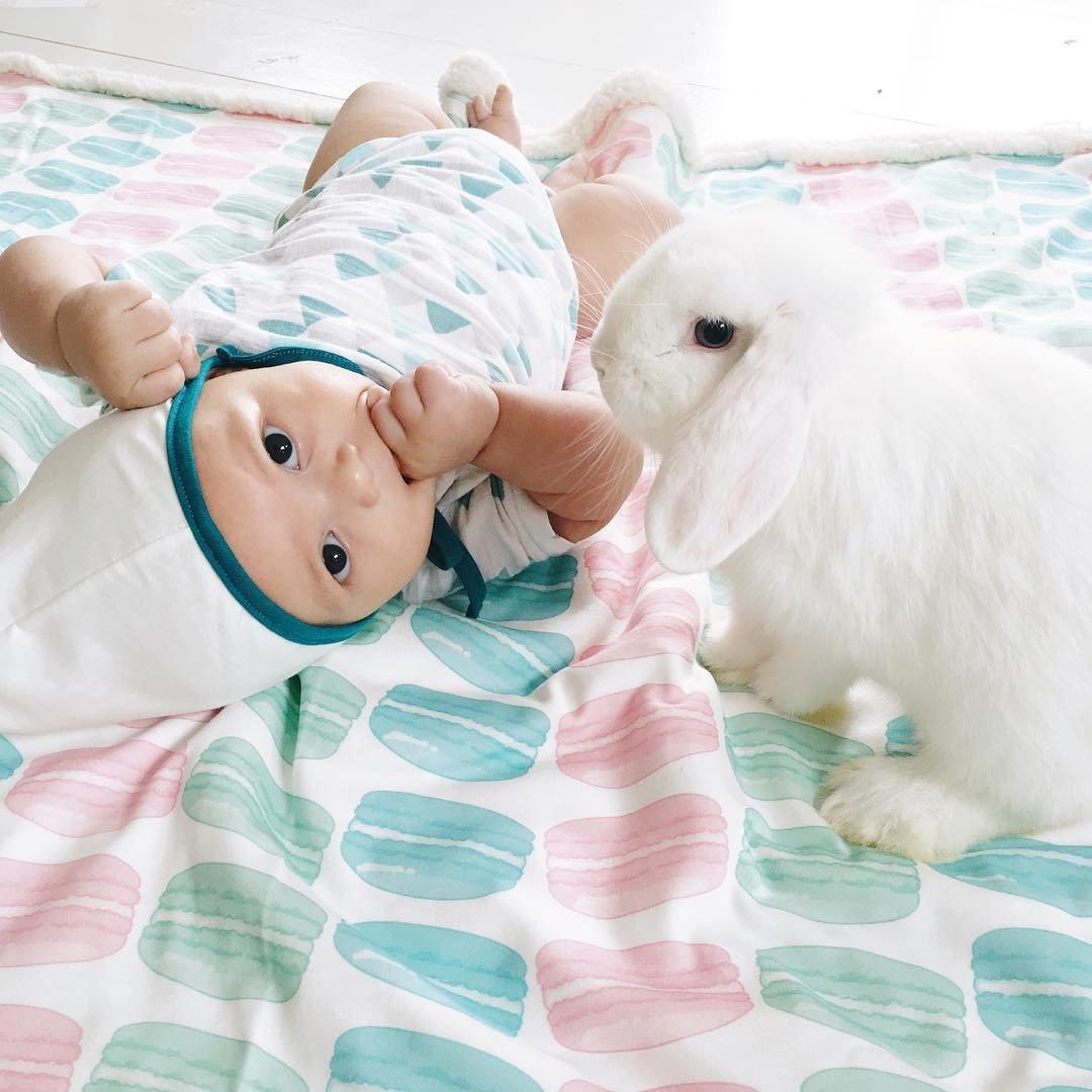 Секс с кроликами 15 фотография
