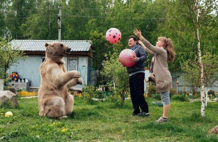 Взрослый медведь живет в семье своих спасителей