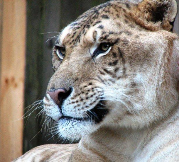 Крупнейшие в мире животные, в существование которых трудно поверить