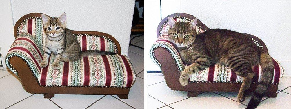 Повзрослевшие котейки тогда и сейчас