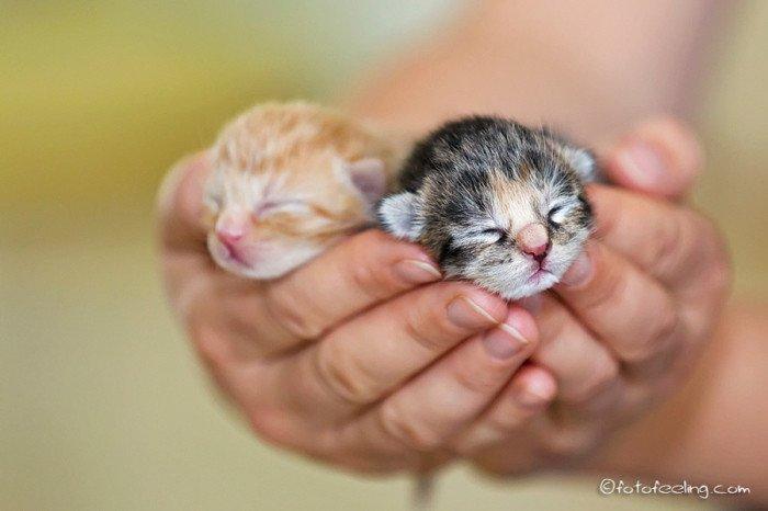 25 маленьких и милых котят