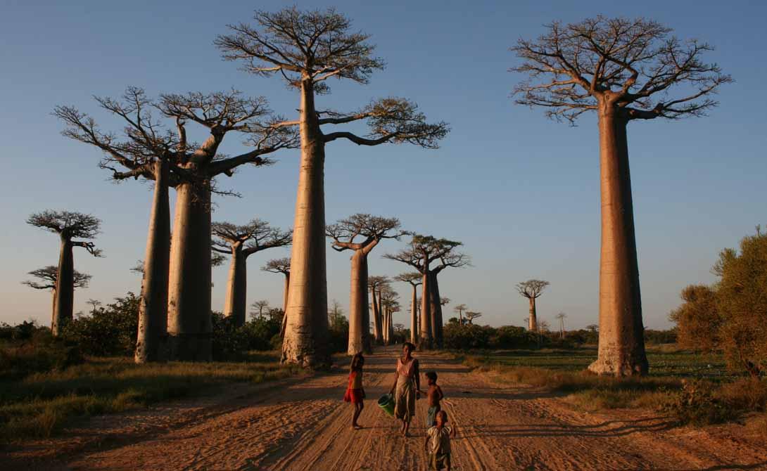Самые фантастические леса мира