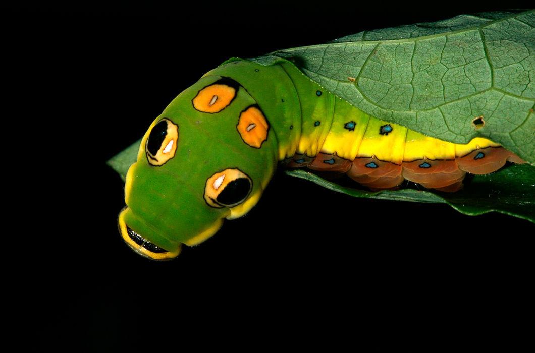 Фантастические фотографии: гусеницы вблизи