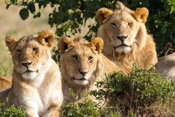 Удивительные примеры спасения человека животными