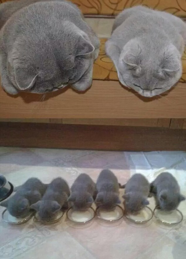 Коты и кошки умеют правильно проводить время в кругу семьи